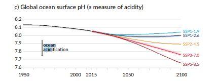 L'acidification des océans selon les différents SSP (AR6)
