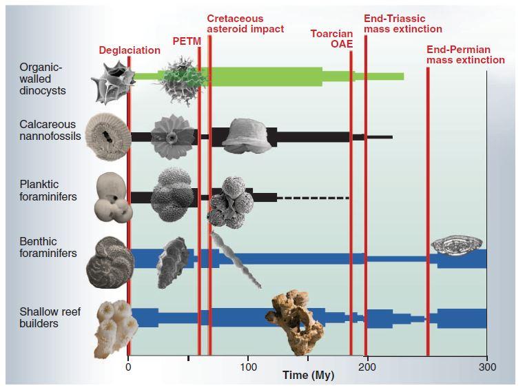 Conséquences de L'acidification des océans couplée avec un réchauffement climatique = extinction d'espèces.