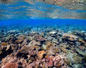 Acidification des océans